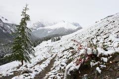 Madera, camino y nieve blancos. Fotos de archivo libres de regalías
