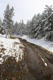Madera, camino y nieve blancos. foto de archivo
