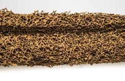 Madera comida por la termita Imagenes de archivo