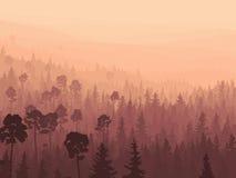 Madera conífera salvaje en niebla de la mañana. Imagen de archivo libre de regalías