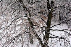 Madera con un arreglo fino de las ramas cubiertas con helada imagen de archivo libre de regalías