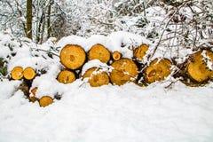 Madera cubierta por la nieve imagen de archivo