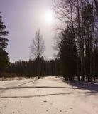 Madera de abedul del invierno Fotografía de archivo libre de regalías