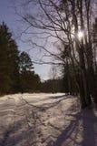 Madera de abedul del invierno Fotografía de archivo