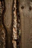Madera de Brown Imagen de archivo libre de regalías