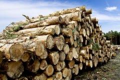 Madera de construcción en el bosque - madera Fotografía de archivo libre de regalías