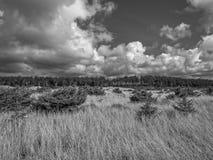 Madera de deriva blanco y negro fotos de archivo
