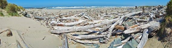 Madera de deriva costera - panorama Imágenes de archivo libres de regalías
