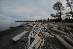 Madera de deriva de la costa oeste Foto de archivo