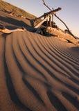 Madera de deriva de la playa Fotos de archivo