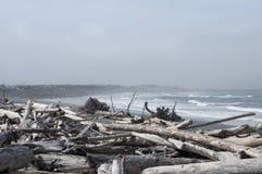 Madera de deriva en la costa en la playa de Rialto Parque nacional olímpico, WA Fotografía de archivo
