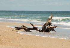 madera de deriva en la orilla Fotos de archivo libres de regalías