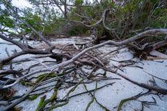 Madera de deriva en la playa imagenes de archivo