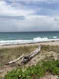 Madera de deriva en la playa imagen de archivo libre de regalías