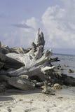 Madera de deriva en la playa 1 Fotos de archivo