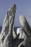 Madera de deriva en la playa 4 Imagen de archivo