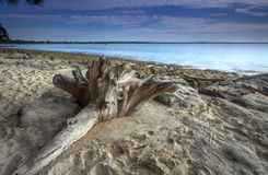 Madera de deriva en la playa Fotos de archivo