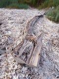 Madera de deriva en la playa Foto de archivo libre de regalías