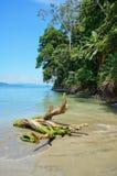 Madera de deriva en la playa con la vegetación tropical Fotografía de archivo