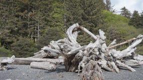 Madera de deriva en la playa de Rialto, Washington State, los E.E.U.U. Fotos de archivo libres de regalías