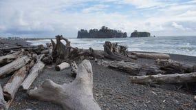 Madera de deriva en la playa de Rialto, Washington State, los E.E.U.U. Fotografía de archivo