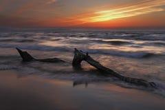 Madera de deriva en la playa del lago Hurón en la puesta del sol Foto de archivo