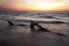 Madera de deriva en la playa del lago Hurón en la puesta del sol Imagen de archivo