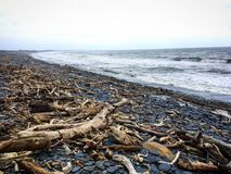 Madera de deriva en la playa después del tifón Fotos de archivo libres de regalías