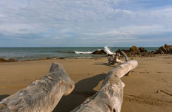 Madera de deriva en la playa en el EL Faro, Ecuador Fotos de archivo