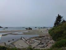 Madera de deriva en la playa jpg Fotografía de archivo