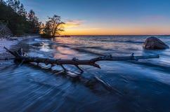 Madera de deriva en la playa en la puesta del sol Imagenes de archivo