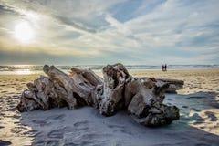 Madera de deriva en la playa que enmarca un par que camina a lo largo de la orilla Imágenes de archivo libres de regalías