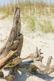 Madera de deriva en Sandy Beach Foto de archivo libre de regalías