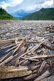 Madera de deriva en un río Imagen de archivo libre de regalías