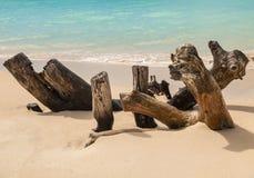 Madera de deriva en una playa de Antigua Imagen de archivo libre de regalías