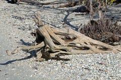 Madera de deriva en una playa de la Florida Imagen de archivo libre de regalías