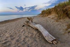 Madera de deriva en una playa del lago Hurón en el crepúsculo Imagen de archivo libre de regalías