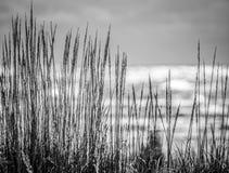 Madera de deriva a lo largo de la costa fotos de archivo