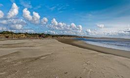 Madera de deriva a lo largo de la costa imagen de archivo libre de regalías