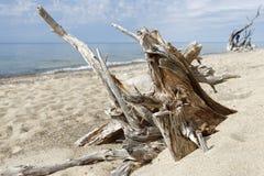 Madera de deriva a lo largo de las orillas del lago Superior Fotografía de archivo