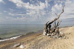 Madera de deriva a lo largo de las orillas del lago Superior Imagen de archivo libre de regalías
