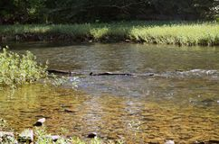 Madera de deriva que flota cerca en un río claro con Rocky Bank fotos de archivo