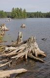 Madera de deriva quemada del lago island Foto de archivo libre de regalías