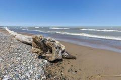 Madera de deriva y guijarros en una playa del lago Hurón - Ontario, Canadá Imagenes de archivo