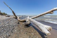 Madera de deriva y guijarros en una playa del lago Hurón - Ontario, Canadá Fotos de archivo