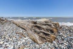 Madera de deriva y guijarros en una playa del lago Hurón - Ontario, Canadá Fotografía de archivo