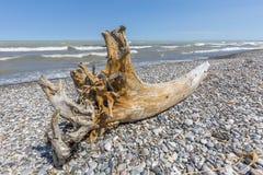 Madera de deriva y guijarros en una playa del lago Hurón - Ontario, Canadá Imágenes de archivo libres de regalías
