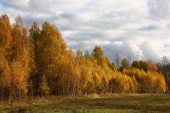 Madera de hojas caducas en el otoño Imagen de archivo