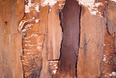 madera de la corteza de la corteza Fotos de archivo