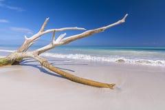 Madera de la deriva en la playa tropical Imágenes de archivo libres de regalías
